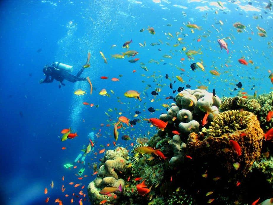 malaysian marine life