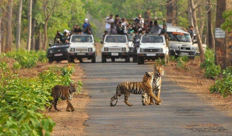 Banerghatta National Park
